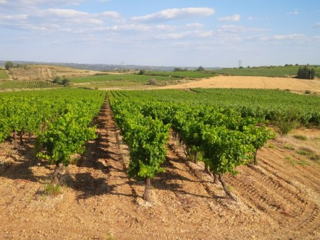 Vente Domaine viticole de prestige Clermont l Herault 995 000 €