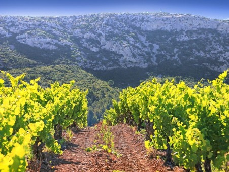 Achat Domaine viticole de qualité Languedoc-Roussillon 2 450 000 €